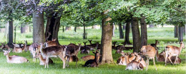 Foto Tiergarten Hannover Novo Film